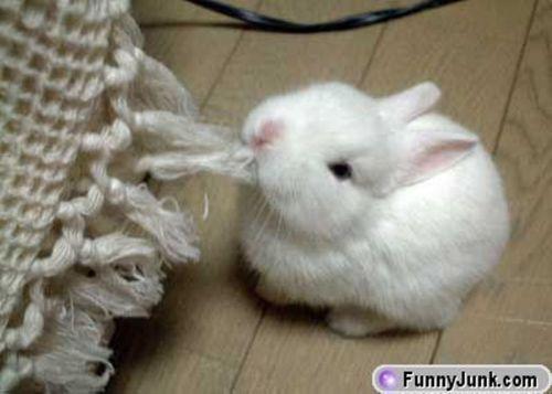 so_cute_rabbit